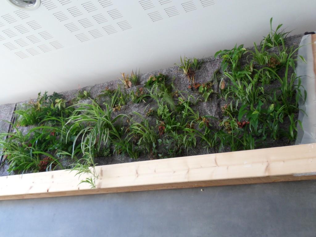 Photo 5 : mur végétal au 23 août 2012.